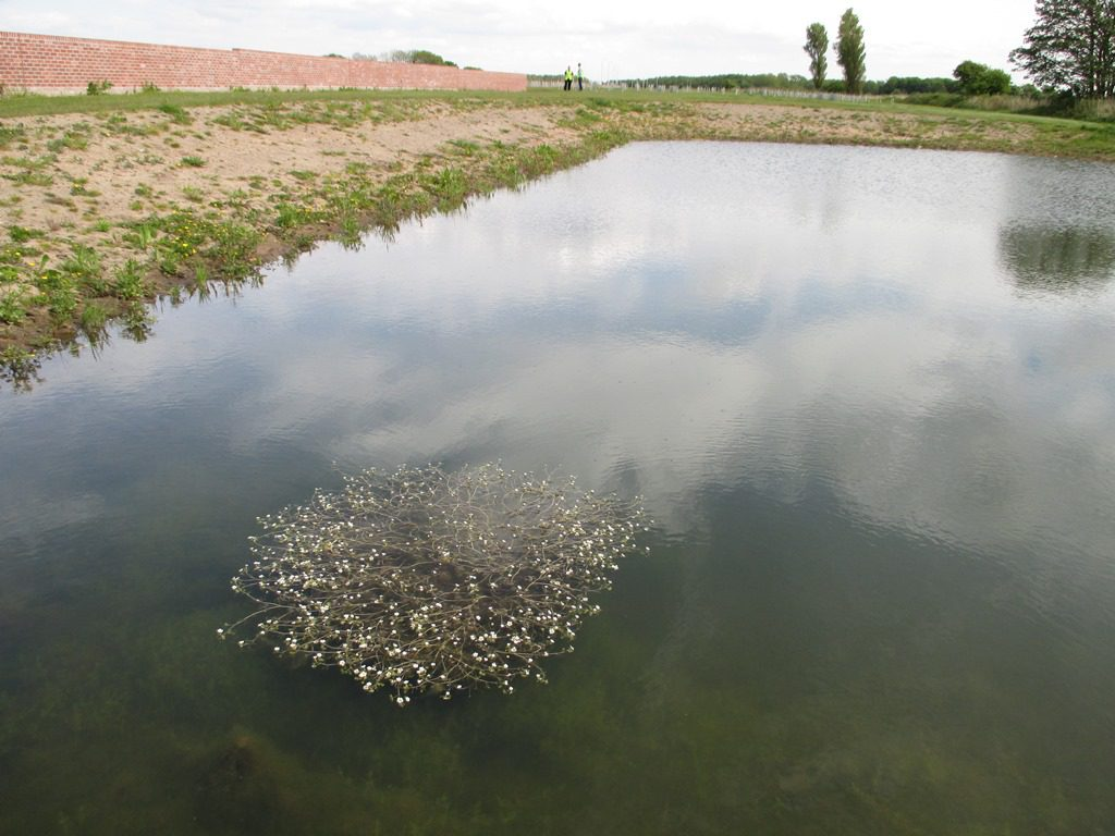 Aquatic planting was becoming established in the wildlife ponds less than a year after completion.