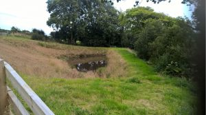 Balancing pond designed to manage surface water run-off and control flows to watercourse. Image: Ramboll